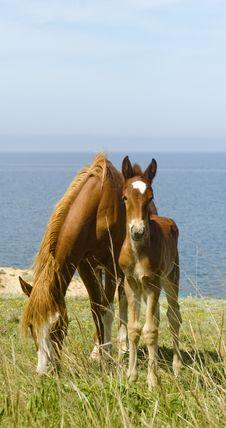 Free Horses Royalty Free Stock Image - 14546356