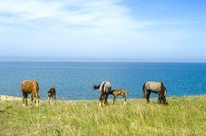 Free Horses Royalty Free Stock Photo - 14546405