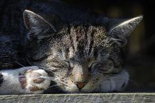 Free Sleeping Cat Royalty Free Stock Photo - 14548255
