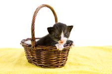 Free Two Weeks Old  Black Kitten In A Basket Royalty Free Stock Image - 14548666