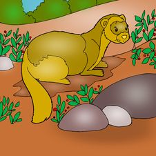 Free Ferret Animated Stock Images - 14548714