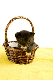 Free Two Weeks Old  Black Kitten In A Basket Stock Image - 14548731