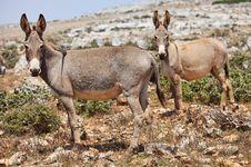 Free Two Donkeys Royalty Free Stock Photo - 14548935