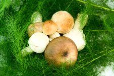 Free Mushrooms Stock Photography - 14548972