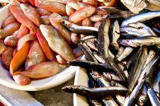 Free Fish Stock Photos - 14549133