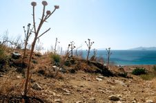 Free A Dry Sea Landscape Stock Images - 14549644