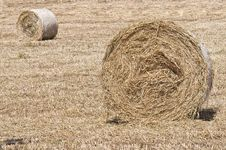 Free Bales Of Hay Royalty Free Stock Photo - 14551655