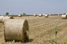Free Bales Of Hay Royalty Free Stock Photography - 14551827