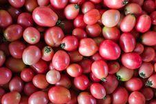Free Tomato Stock Photography - 14552512