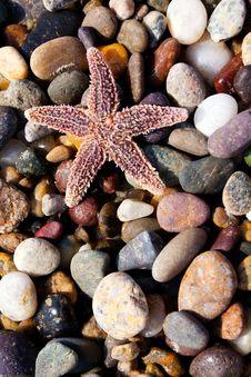 Free Starfish Royalty Free Stock Photo - 14552885