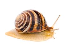 Free Snail Stock Photography - 14554622