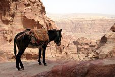 Free Mule In The City Of Petra Royalty Free Stock Photo - 14555215
