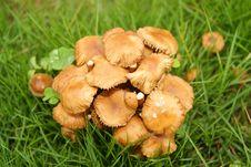 Small Mushrooms Stock Photos