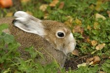 Free Rabbit Sitting On A Green Grass Royalty Free Stock Photos - 14557828