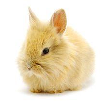Free Rabbit Stock Image - 14559211