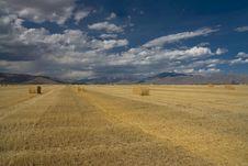 Free Idaho Harvest Stock Image - 14559401