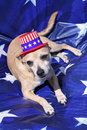 Free Yankee Doodle Doggie Stock Photos - 14561883