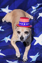 Free Yankee Doodle Doggie Stock Photos - 14568633