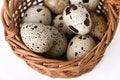 Free Quail Eggs Stock Photo - 14568920