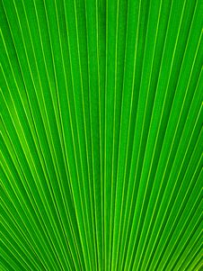 Free Palm Leaf Radius Vertical Stock Images - 14560294