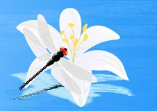 Free Dragonfly On Lily Royalty Free Stock Photos - 14561378