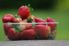 Free Strawberry Stock Photography - 14561692
