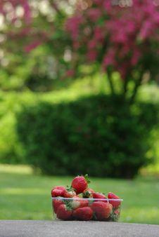 Free Strawberry Royalty Free Stock Image - 14561756
