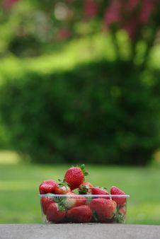Free Strawberry Stock Image - 14562721