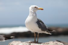 Free Big Cormorant On Stone Stock Images - 14563024