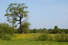 Free Summer Meadow Stock Image - 14563141