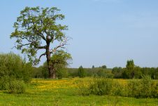 Free Summer Meadow Stock Photos - 14563153