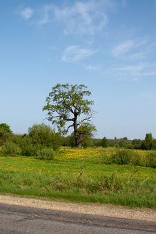 Free Summer Meadow Royalty Free Stock Photography - 14563167