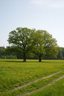 Free Summer Meadow Royalty Free Stock Photos - 14563218