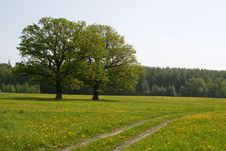 Free Summer Meadow Royalty Free Stock Photos - 14563238