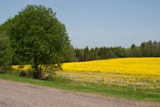 Free Summer Meadow Stock Photography - 14563252