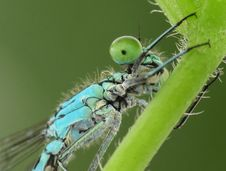 Free Dragonfly Royalty Free Stock Photography - 14563727
