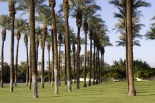 Free Palm Trees Royalty Free Stock Photography - 14564737