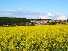 Free Yellow Meadow Royalty Free Stock Photo - 14566335