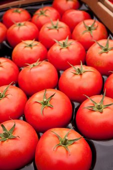 Free Organic Red Tomatoes Royalty Free Stock Image - 14566536