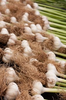 Free Organic Garlic Stock Photo - 14566550