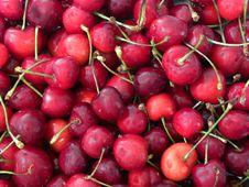 Free Juicy Cherries Stock Photos - 14566953