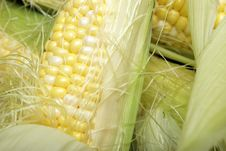Free Corn On The Cobb Stock Photography - 14567392