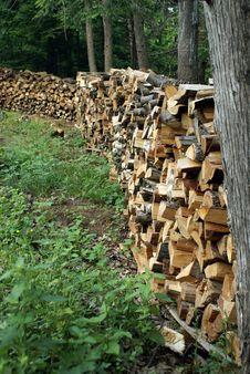 Stockpile Of Firewood Stock Image