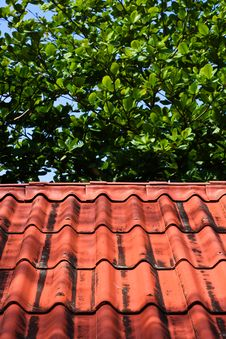 Roof And Leaf Royalty Free Stock Photos