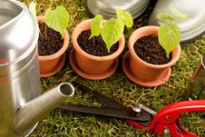 Free Gardening Concept On Grass Stock Photo - 14568040