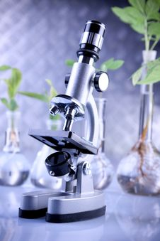 Free Plants In Laboratory Royalty Free Stock Photography - 14568887