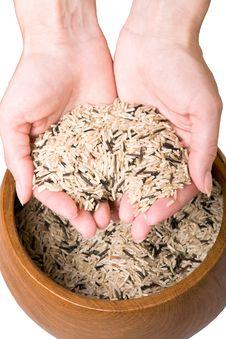 Free Handful Of Rice Stock Image - 14568931