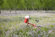 Bicycle In Wildflower Field
