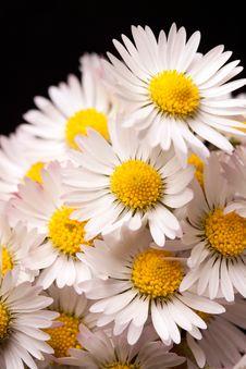 Free Daisy Closeup Stock Photography - 14569612