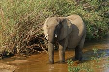 Free African Elephant Royalty Free Stock Images - 14569999
